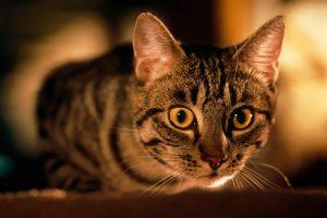 4 Rekomendasi Makanan Kucing yang Bagus